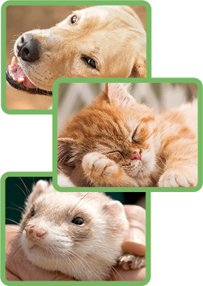 Dog and Cat Vaccinations in Jonesboro, AR